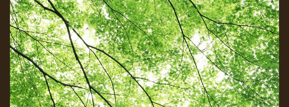 inspection des arbres par arbolab arboriste. Black Bedroom Furniture Sets. Home Design Ideas